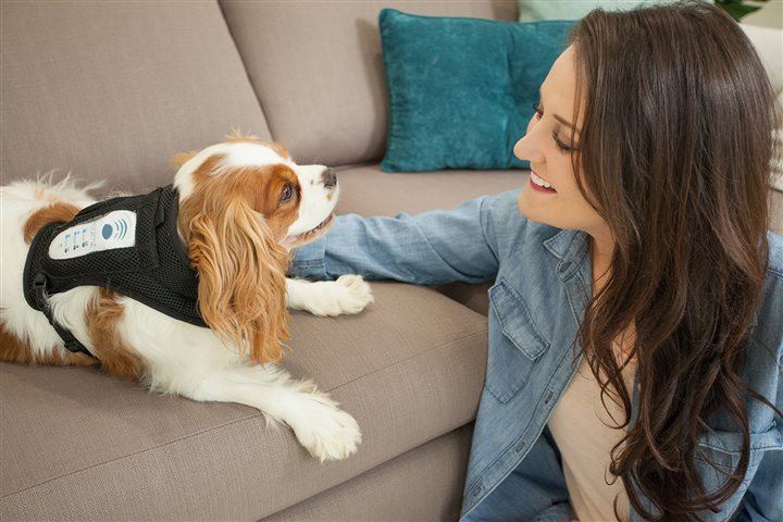 Improve your Dog's Emotional Life
