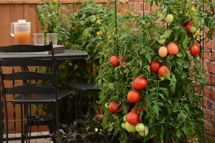 Check Out this Year's Top 3 Trends in Vegetable Gardening