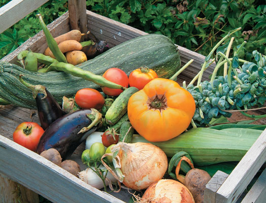 Small-Space Gardens: Easy Tips for Homegrown Flavors