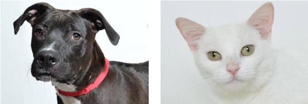 APL Sets August Pet Adoptions – Press Release