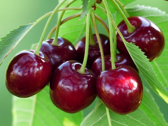 4 Surprising Health Benefits of Cherries – This Summer's Superfruit