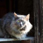 Animal Protective League announces New Barn Cat Program