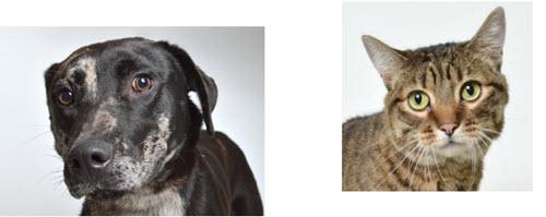 APL sets December Pet Adoptions
